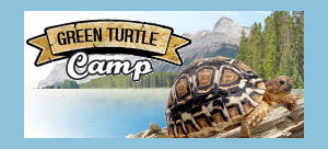 Green Turtle Camp